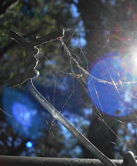Net Working (sequacious) Tags: blue trees light sky santacruz macro nature fence lenseflare bokeh spiderweb trails chainlink orbs rhett cobwebs blueballs dscw50 blueorbs flickrgolfclub sequacious