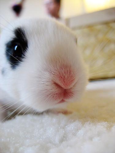 Binkie Bunny