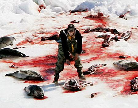 clubbing baby seals. seals-1