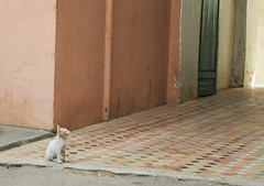 here kitty (fatimaflicks) Tags: travel colors morocco maroc fatima