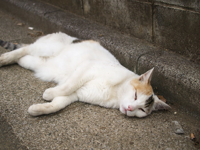 眠り猫/sleepy cat