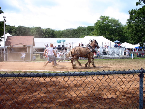 horse pulling competition at the fair