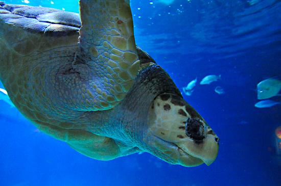 Adventure Aquarium Turtle