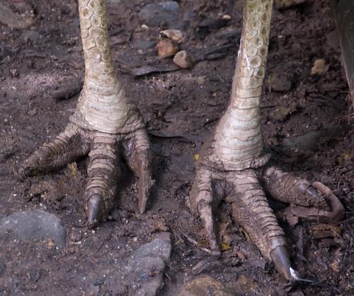 Cassowary Claws