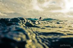 dune (SARA LEE) Tags: texture water hawaii surf underwater dof bokeh surfer dune earlymorning surfing outoffocus housing hilo sarahlee honolii ewamarine legothenego vivantvie