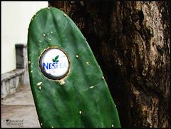 Refrscate!! (Vane ) Tags: vanessa cactus verde green america photography design venezuela sony ve communication latinoamerica sur vane h2 diseo ven hernandez chapa fotografa venezuelan latinamerican nestea suramerica comunicacion dsch2 resfrescante vnss cardonales vanessahernandez vanhercar14 vnsschc