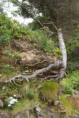 bluffs 2 (dolanh) Tags: oregoncoast oswaldweststatepark shortsandsbeach