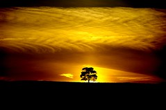 Good Night! (Cryodigital - Sadly deceased) Tags: light sunset cloud tree night dark gold golden sundown good horizon sensational ng 1001nights mb nationalgeographic gbr ogm ineffable firstquality flickrsbest theemeraldsociety goodnightmylove dulynoted anawesomeshot skytheme visiongroup takeitoutside givemeratings platinumheartaward platinumheartawards elitephotography proudshopper pentaxk20d goldsealofqualityaward multimegashot damniwishidtakenthat overtheshotaward obq vision100 oracleofgrandmuses proudshopperaward platinumgolddoubledragonawards doubledragonawards lesamisdupetitprince livinglifethroughalens thebeautifulimagetopaward cryodigital allrightsstrictlyreserved saariysqualitypicturesgallery sublimemasterpiece creativephotoaward novavitanewlife creativemasteraward creativephotomasteraward topphotographygroupaward damniwishidtakenthat10 spiritofphotographyaward flickraward damnshowcaseaward awb2008