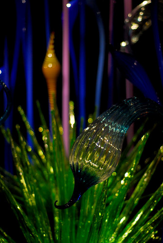 chihuly 01
