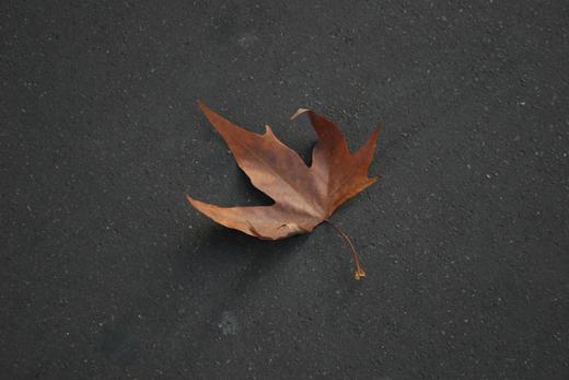23_septembre_2008_feuille_7442