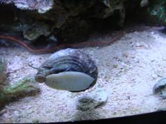 en aquarium snail