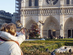 A woman feeding birds in front of Notre Dame and its Christmas Tree (Chris Devers) Tags: 2003 christmas trip travel decorations light vacation paris france building tree church pine architecture lights louis europe honeymoon catholic ledefrance cathedral religion gothic eu christmastree christian christmaslights notredame ornament hugo decorate iledefrance notredamedeparis fra romancatholic parisfrance victorhugo frenchgothic archbishop ourlady ledelacit flyingbuttress violletleduc romancatholicchurch mauricedesully naturalism thehunchbackofnotredame exif:exposure=001sec1100 exif:exposure_bias=010ev exif:aperture=f56 exif:flash=flashfiredautomode louisvii parisfra popealexanderiii desully exif:focal_length=16mm exif:iso_speed=80 cameraolympusc50 camera:make=olympusopticalcoltd lens50f18 meta:exif=1257942526 camera:model=x2c50z exif:orientation=horizontalnormal exif:filename=dscjpg meta:exif=1350403758