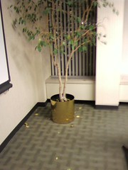 Autumn in Conference Room 22b
