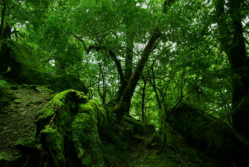 Rainforest & Moss by Tim√, on Flickr
