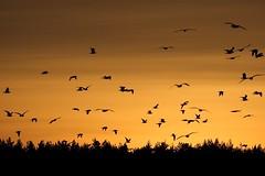 Maskavas Late Afternoon (liber) Tags: sunset birds delete10 delete9 delete5 delete2 delete6 delete7 flight delete8 delete3 delete delete4 save latvia riga maskavas ef70300mmf4556doisusm