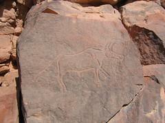Cattle (Nick . Brooks) Tags: sahara archaeology desert libya prehistoric rockart engravings fezzan mathandoush wadimathandoush