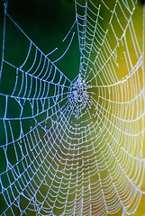 Web (Images by John 'K') Tags: web spiderweb dew johnk naturesfinest inspiredbylove topshots d40x johnkrzesinski randomok
