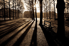 Dawn at the Lange Voorhout... (zilverbat.) Tags: old trees light shadow holland history netherlands beautiful dutch wow bomen pov centre scenic sunny denhaag elegant zon thehague posthoorn bence voorhout ochtendgloren hofstad hofstijl zilverbat flikkah