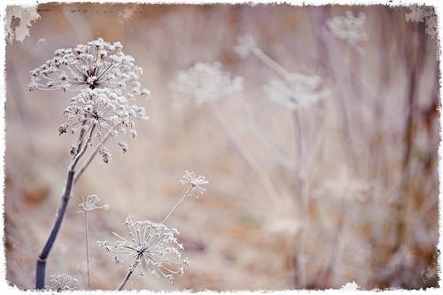 Winter scene  (_DSC5663)
