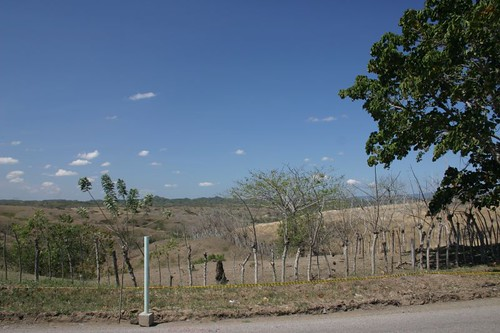 Landscape's getting dryer as I get further north towards the coast. North of Sincelejo, Colombia.