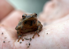 "C-Falls - Spring Peeper in hand • <a style=""font-size:0.8em;"" href=""http://www.flickr.com/photos/30765416@N06/5718847468/"" target=""_blank"">View on Flickr</a>"