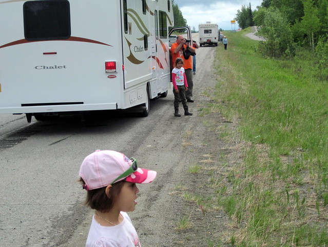 Moose watchers 20110620