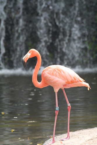 Flamingo Stock Photos, Images, & Pictures - 19,187 Images