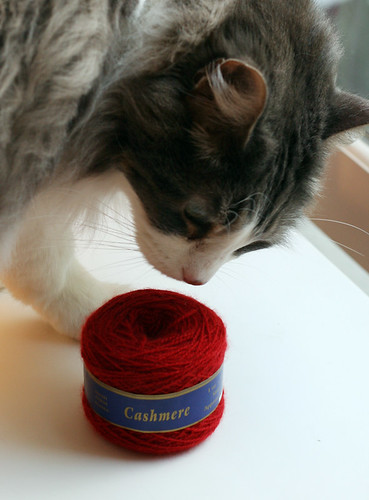 Kaesea checking out the cashmere.