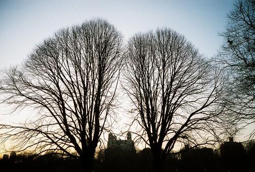 Hugger Trees