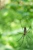 arachnid (pixelplated) Tags: philippines palawan canonef24105mmf4lisusm palawanwildliferescueandconservationcenter