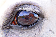 In the eye of a horse (Tambako the Jaguar) Tags: horse white house reflection eye me closeup fence myself fur mammal caballo cheval ojo switzerland nikon artistic farm oeil hero winner zrich cavallo pferd auge equine gossau d300 galope equid platinumphoto grt photofaceoffwinner platinumheartaward pfogold goldstaraward oltusfotos herowinner