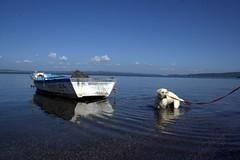 Ormeggiati (vecchiostile75 (IN\OUT)) Tags: sky dog lake reflection cane landscape lago 350d boat barca cielo paesaggio bracciano supershot abigfave anawesomeshot diamondclassphotographer thebestofday gnneniyisi vecchiostile75 lorenzogiove