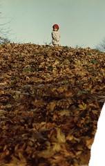 (LaLoux) Tags: freeassociation leaves 1982 hill e fa associational photodomino705