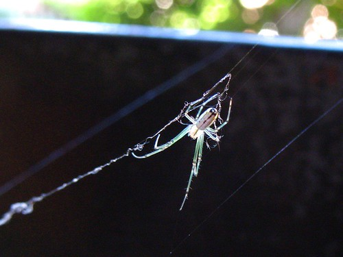 20080509 - Spider