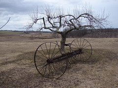 Old Farm Machinery (Trevdog67) Tags: old canada tree history apple grass grey novascotia farm gray rusty overcast orchard machinery annapolisvalley melanson implement