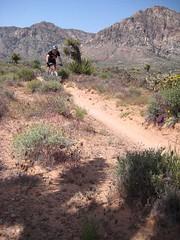 Cottonwood trails, Las Vegas