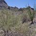Pichaco Peak Arizona