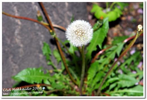 Hokkaido_0774