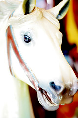 Carousel Horse (Lightning Bug Creek) Tags: texas fortworthzoo carouselhorse colorburn
