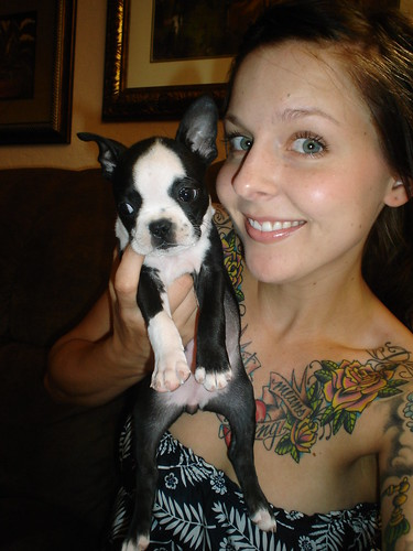 our new baby boston terrier madeline