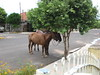horses parked on the street (parttimefarm) Tags: street horses brasil parked echapora