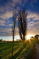 [フリー画像] 自然・風景, 樹木, 朝日・朝焼け・日の出, 日光・太陽光線, ニュージーランド, 200807070900