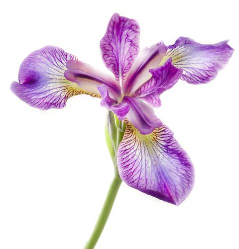 Unbearable Lightness of Iris