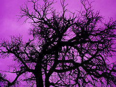 Old dead tree. (fatslick70) Tags: sky tree clouds newmexcio