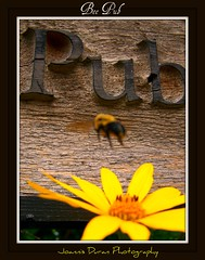Bee Pub (GlossyEye.) Tags: world life park street city urban toronto canada abstract reflection art nature water weather night photography gold perfect day photographer dragon view shot natural shots outdoor spirit picture surreal award places pic passion soe outstanding the naturesfinest blueribbonwinner supershot flickrsbest mywinners abigfave flickrgold platinumphoto anawesomeshot aplusphoto ultimateshot naturefinest diamondclassphotographer flickrdiamond theunforgettablepictures betterthangood yspl picnikorpicnic