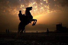 When all limits are crossed (Aliraza Khatri) Tags: pakistan sea horse beach silhouette view action karachi sindh prancing 100faves khatri explorefrontpage canon400d aliraza interestings21072008