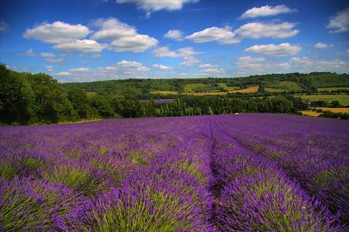 Texas Romantic Getaway To Lavender Fields Blair House Inn