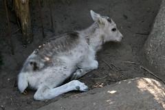 Animal at Aalborg Zoo