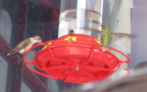 Two Hummers and a Bee