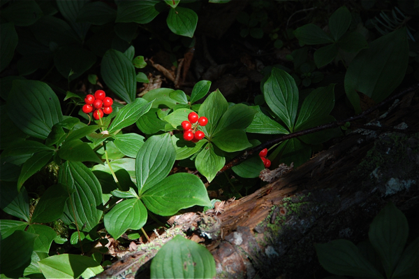 berries_0132